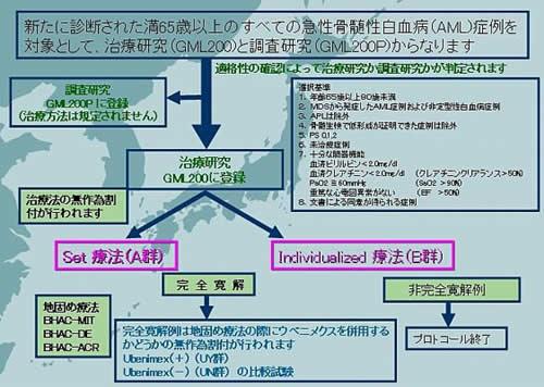 高齢者急性骨髄性白血病プロトコール GML200